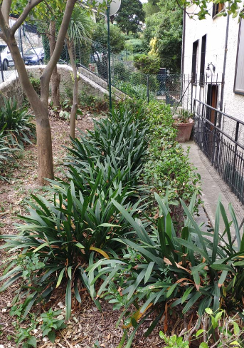 Immagine giardino